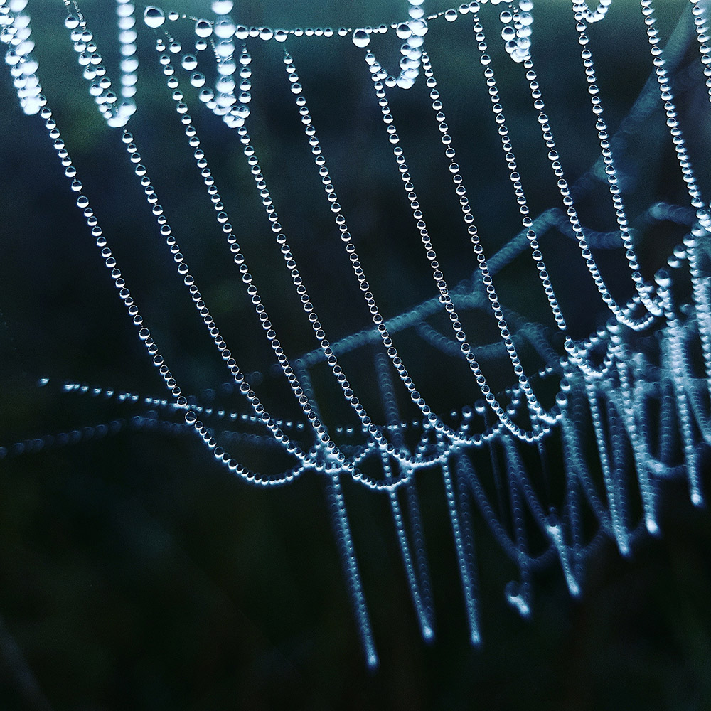 Mother Nature's pearls; fot. Maria Duliban; kategoria: MACRO & DETAILS